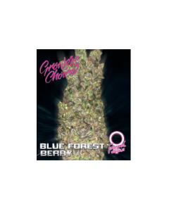 Blue Forest Berry Auto