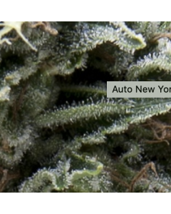 New York City CBD Auto