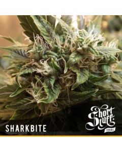 Short Stuff Seeds – Sharkbite Marijuana Seeds