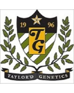 Taylor'd Genetics Seeds – The NHS Marijuana Seeds