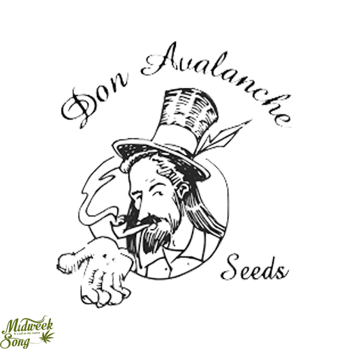 Don Avalanche Seeds