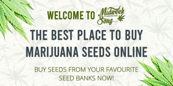 Buy the best marijuana seeds online